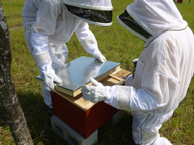 bees-new-hive