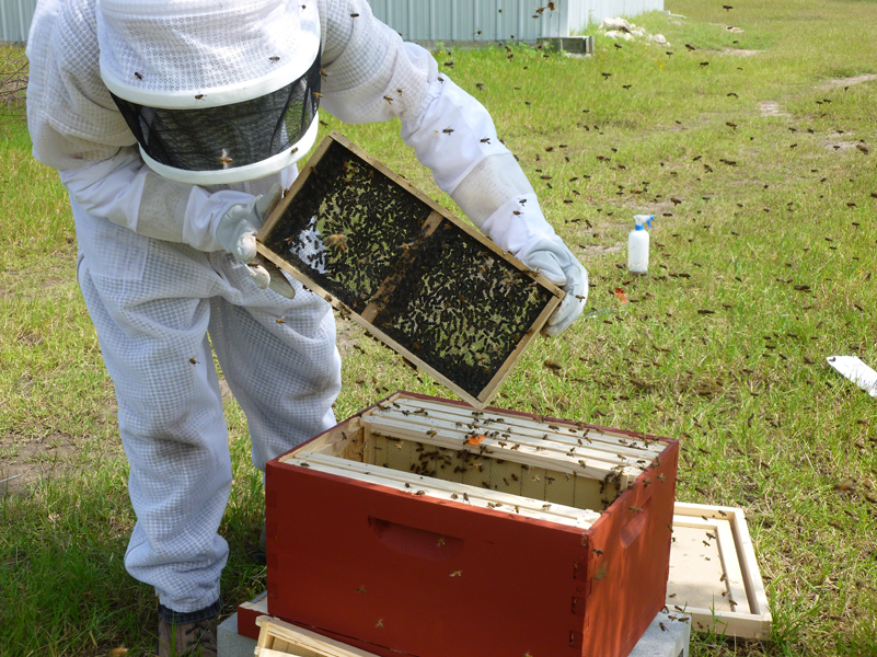 bees-working-2