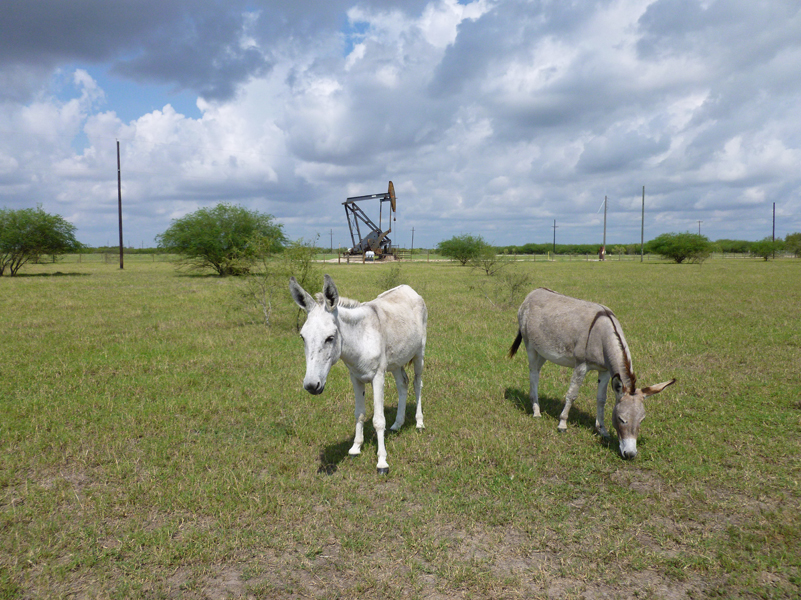 donkeys-oil-well
