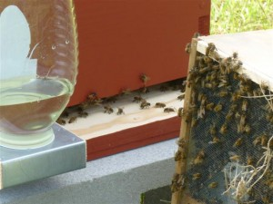 Placing Bees in Hive